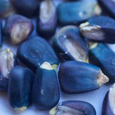Blue Corn Investments